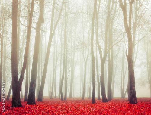 Autumn park in foggy weather -autumn landscape view of autumn foggy park. - 120037566