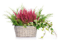 Basket With Heather