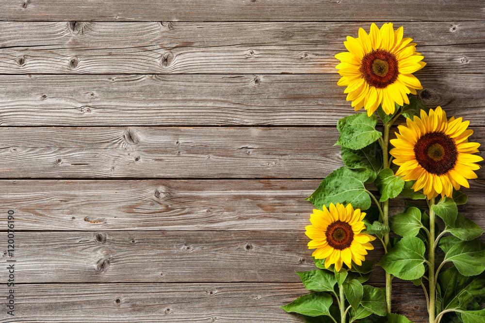 sunflowers on wooden board