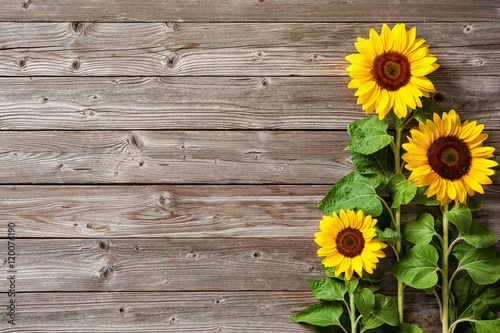 In de dag Zonnebloem sunflowers on wooden board
