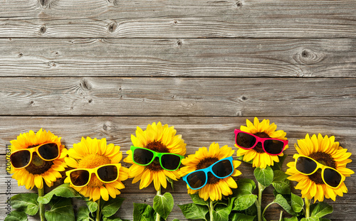 Fotografie, Obraz Sunflowers with sunglasses