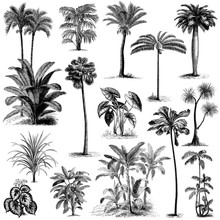 Vintage Hand Drawn Palm Trees ...