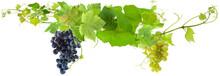 Grappes De Raisins Et Pampres ...