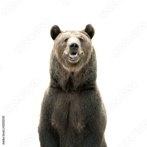 Fotografie, Tablou  Big brown bear isolated on white background