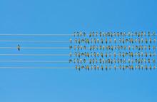 Individuality Concept, Bir...