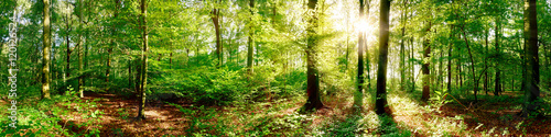 Fototapeten Wald Wald Panorama bei strahlendem Sonnenschein