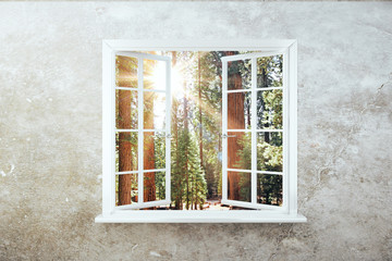 Fototapeta White window with forest view