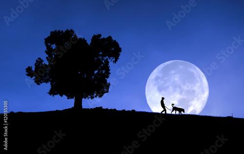 Cadres-photo bureau Vache Moon
