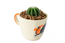 Small Cactus In A Cup Of Chick...