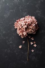 Fototapeta samoprzylepna Dried flowers hydrangea on black vintage table top view. Flat lay styling.