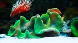 Fototapeta Do akwarium - Podwodny tropikalny świat w niezwykłych kolorach