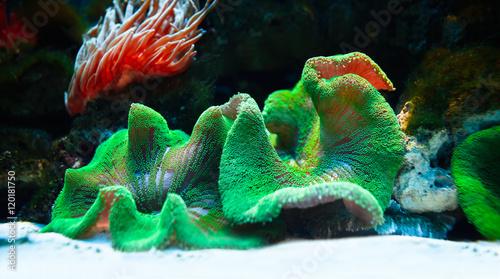 Poster Sous-marin Podwodny tropikalny świat w niezwykłych kolorach