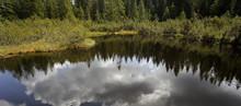 Three Lake Moor (Trijezerni Slat), National Park Sumava, Bohemian Forest, Czech Republic