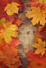 Bright Autumn Leaves Arranged In A Frame On A Shabby Chic Background