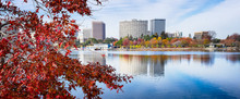 Oakland, California Lake Merritt View Framed By Foreground Red Maple Leaf Tree