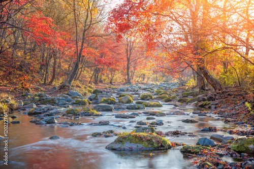 Aluminium Prints Autumn Autumn creek woods with yellow trees foliage
