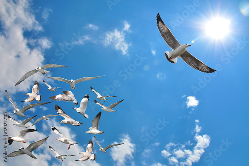 Photo group of flying seagull birds
