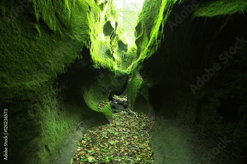 Fotografie, Obraz  日本の神秘は苔の洞門