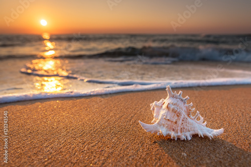 Seashell on the sand at the beach early in the morning