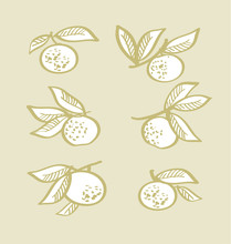 Orange Hand Drawn Element. Tangerine Citrus Vector Illustration
