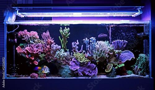 Poster Sous-marin Real Dream Coral Reef Aquarium Tank