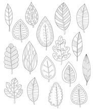 Collection Of Leaves For Coloring Pages, Set Of Different Leaves For Coloring Pages, Hand Drawn Adult Coloring Page, Outline Vector Illustration