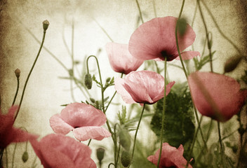 Fototapetamohnblumen alt papier
