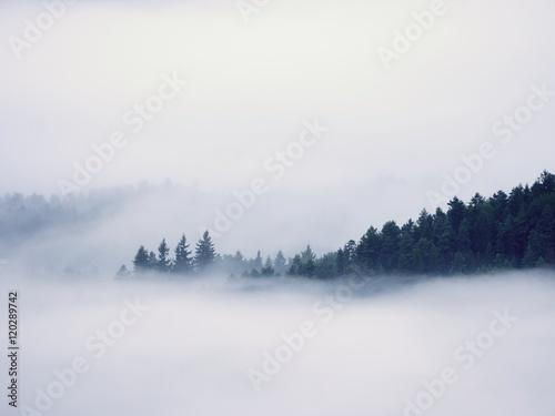 ciezka-mgla-w-lesie