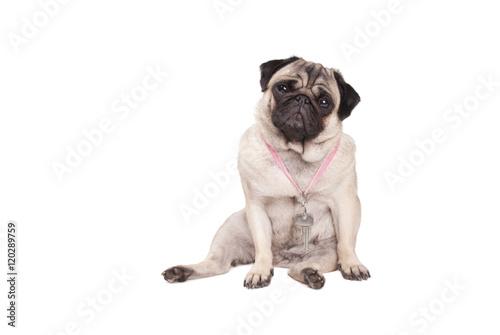 Poster Dog Sleutelkind, zielig kijkende mopshond met traan in oog en sleutel om nek