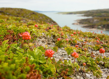 Cloudberries On The Beach