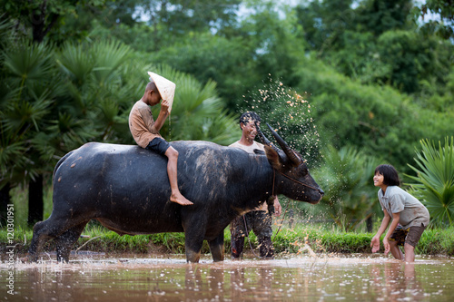 Staande foto Buffel The children are funny with their father and buffalo.