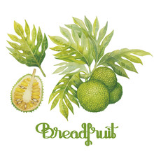 Watercolor Breadfruit Set