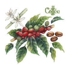 Watercolor Coffee Collection