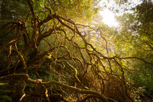 Twisted Enchanted Tree Limbs