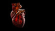 canvas print picture - Anatomy of Human Heart Isolated on black