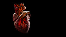 Anatomy Of Human Heart Isolated On Black
