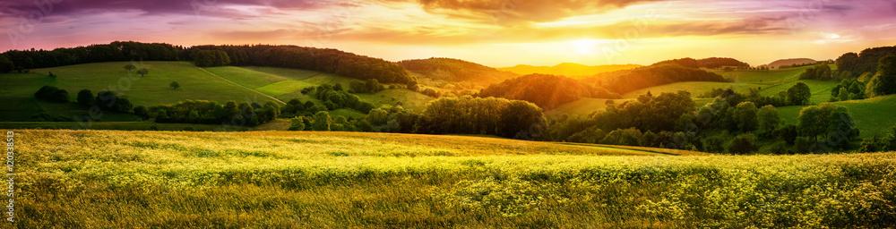 Fototapeta Blühende Wiese bei Sonnenuntergang, ein Panorama mit stimmungsvollen Farben