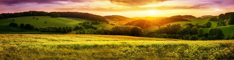 FototapetaBlühende Wiese bei Sonnenuntergang, ein Panorama mit stimmungsvollen Farben