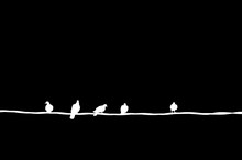 Birds On Electric Wire On Blac...