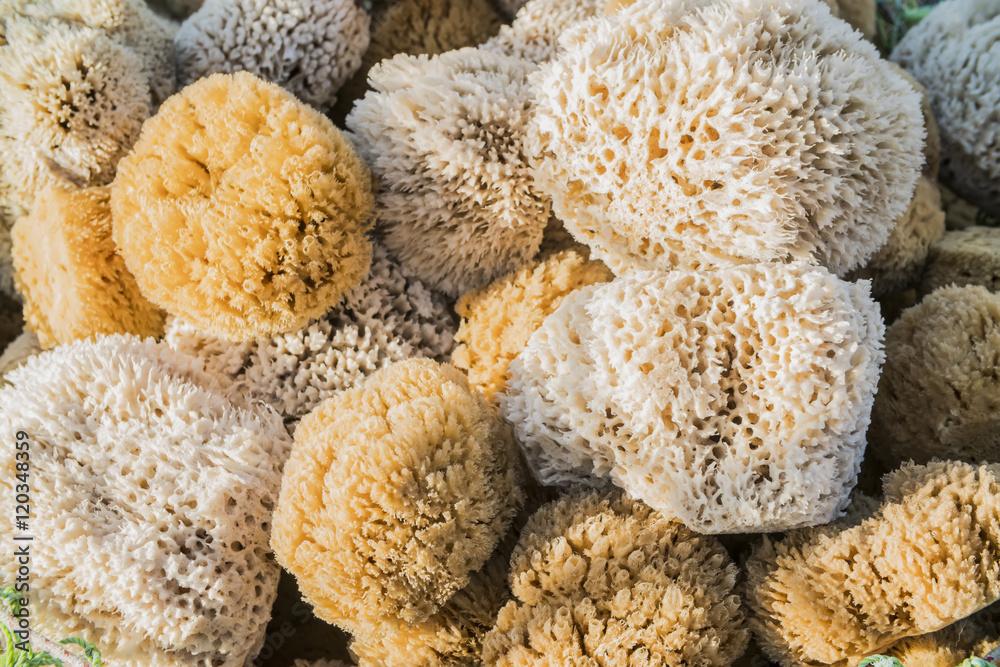 Fototapeta background of colorful sea sponges