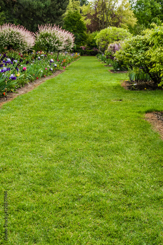 Foto op Canvas Tuin Green lawn and shrubs in a garden