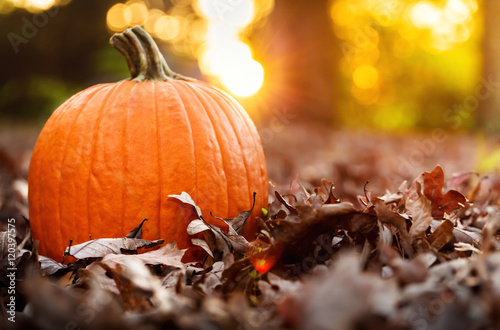 Foto Big orange pumpkin with fall leaves at sunset