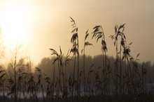 Amazing Sunset Through The Gra...