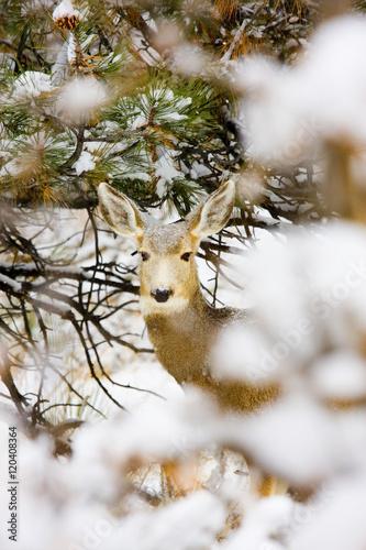 Valokuva  Snowstorm Deer