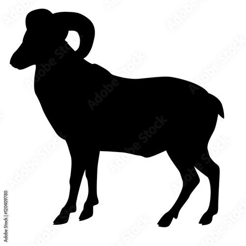 Wild  ram  black silhouette vector illustration Fototapet