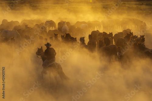 Photo  Western cowboys riding horses, roping wild horses..