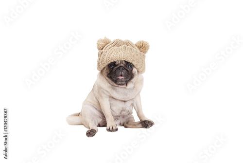 Poster Dog schattig zittende lachende mopshond met gebreide muts geisoleerd op witte achtergrond