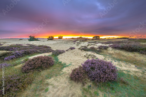Dunes Grass and Heathland Canvas Print
