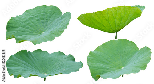 Deurstickers Lotusbloem Lotus leaf isolated on white background, Clipping path