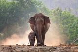 Matka i słoniątko spacerują razem